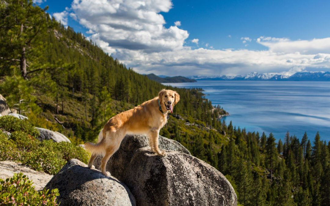 The Best Dog Beaches in North Lake Tahoe