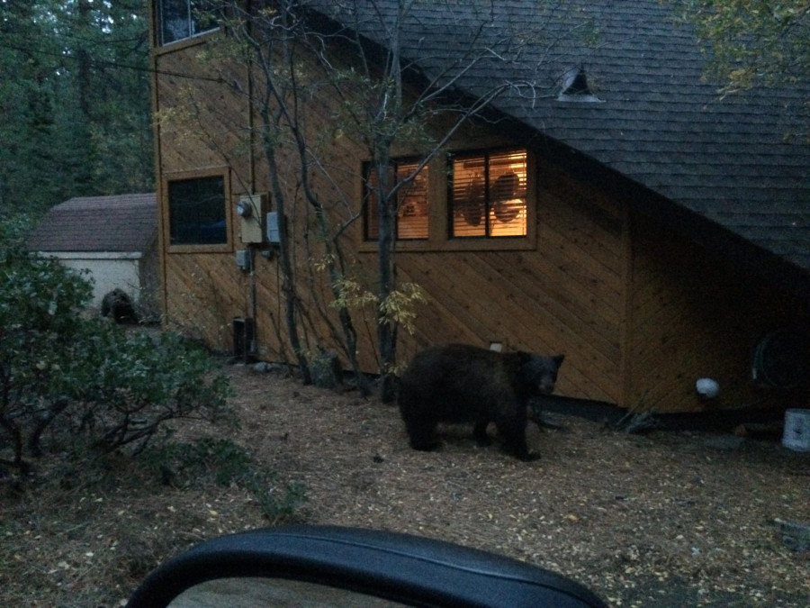 Bear at my house