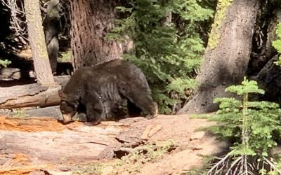Lake Tahoe Wildlife and How to Deal with Encounters