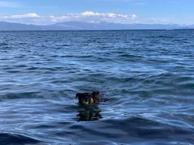 Patton Beach Dog swimming Tahoe