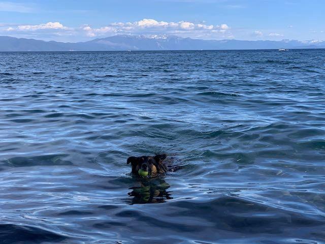 Edgewood Tahoe Resort Summer Webcam link
