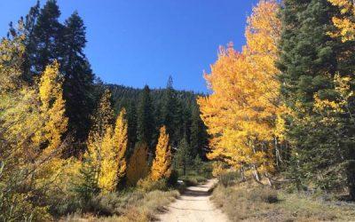 ¿Amante de las Hojas? – Explora los Senderos de Lake Tahoe en Otoño