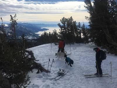Travesia en esqui con perro